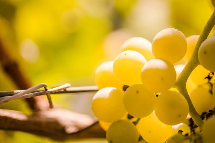 Esiste il vino vegano? Come riconoscerlo?