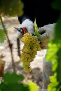 Il cibo contribuisce a costruire miti secondo Roland Barthes. Lo dimostra il vino per la Francia