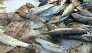sapere scegliere il pesce è essenziale per evitare rischi per la salute se lo si consuma crudo