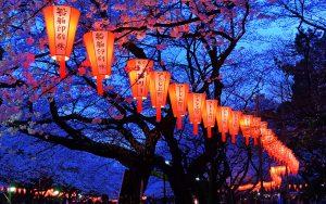 In Giappone durante l'hanami, festa che celebra i ciliegi in fiore, si organizzano diverse feste