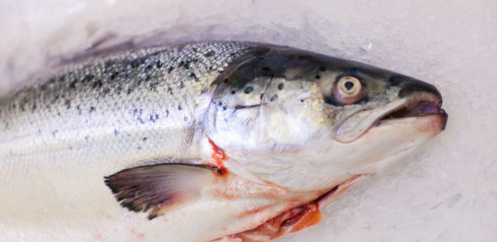 Pesce fresco: le regole per pulirlo