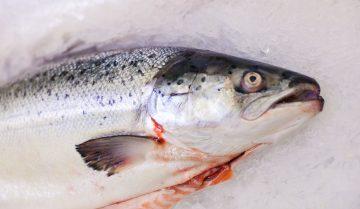 Pesce fresco: le regole per pulirlo. Come si puliscono capesante, tonno, pesce spada e cozze