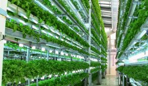 Vertical farm, la coltivazione si sposta al chiuso e la campagna in città
