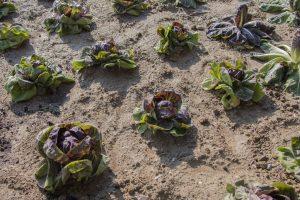L'abbecedario di Fico: agticoltura