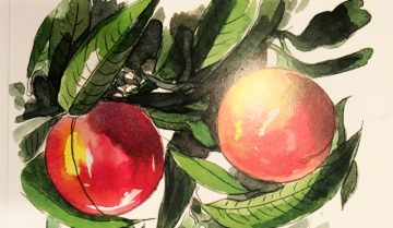 Lessico#foodcultural: frutto climaterico