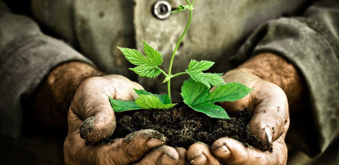 5 Giugno mondiale dell'ambiente. Che cosa fare? Ecco 2 esempi: carta del vino responsabile e agroecologia