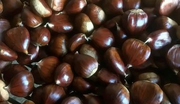 Conosci la differenza tra castagne e marroni?
