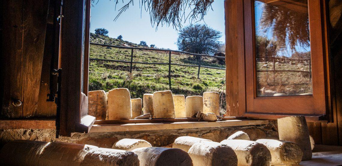 Sai quali sono i formaggi più costosi al mondo