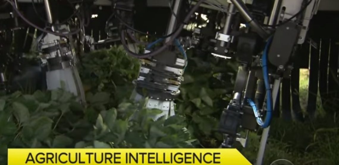 Intelligenza artificiale, agricoltura e cibo