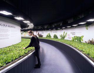 """'uomo e il futuro. """"Hortus"""" uno spazio interattivo dentro Fico Bologna ecco le nuove frontiere dell'agricoltura"""