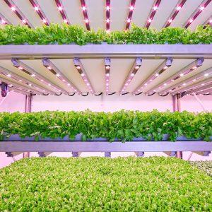 Agricoltura verticale automatizzata grazie a Planet Farms
