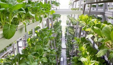 agricoltura verticale automatizzata