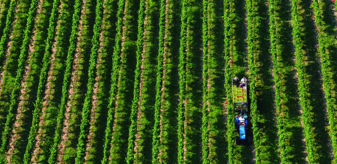 vini di mirabella e la Franciacorta: cibo e cultura