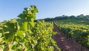 Wine Tourism: 12 mesi, 12 idee per scoprire l'Italia