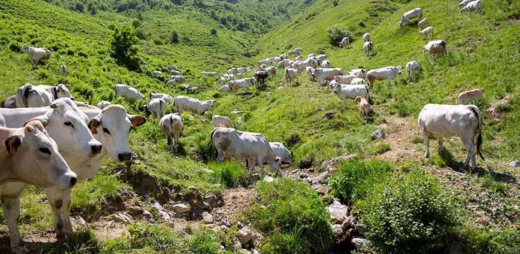 coltivare la carne: un nuovo modo di allevare gli animali
