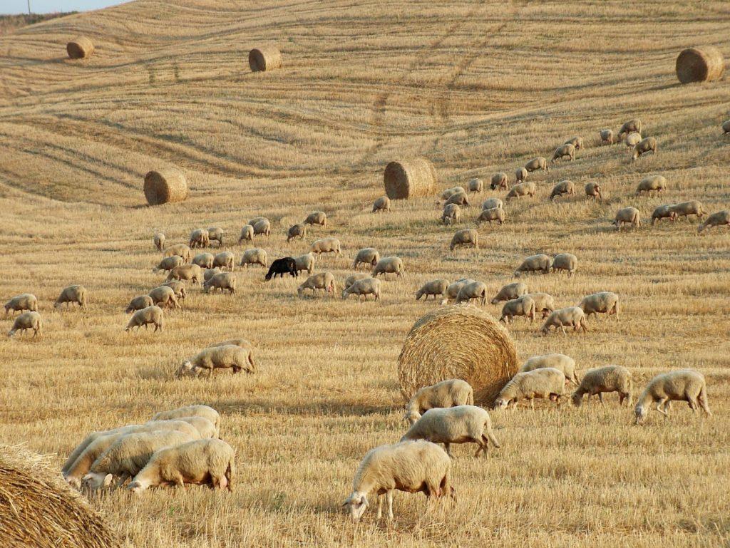 borghi gita: Chianni e le colline toscane