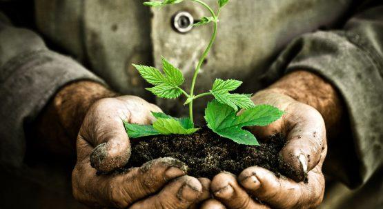 Food Forest, la foresta commestibile sostituisce l'orto nel cuore dei milanesi