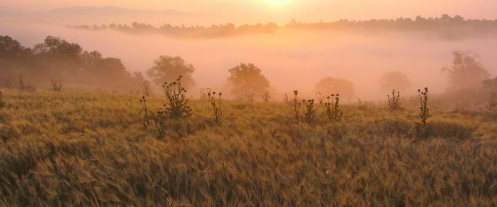 visioni di Toscana _ alba a La Maliosa