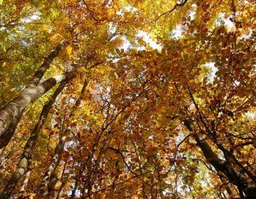 dizionario autunnale foliage
