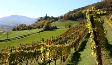 colli piacentini wine lovers: itinerario per scoprire vini e cantine